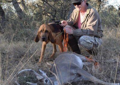 Ruger Tracking dog