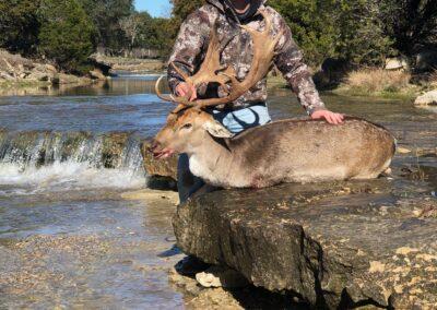 TX Fallow Deer Harvest