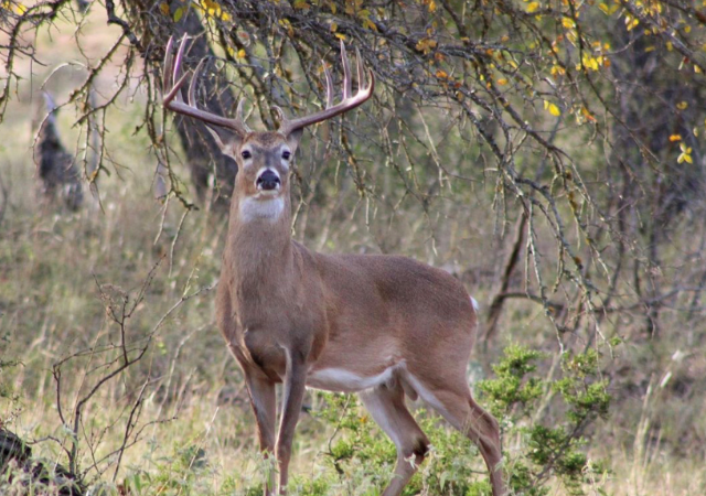Central Texas Deer Hunting