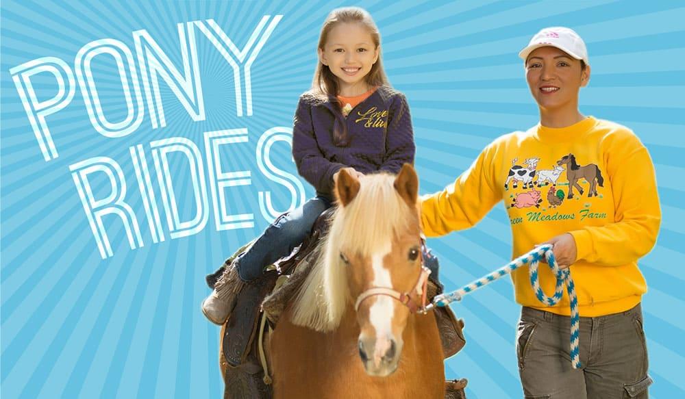 pony rides brooklyn green meadows farm