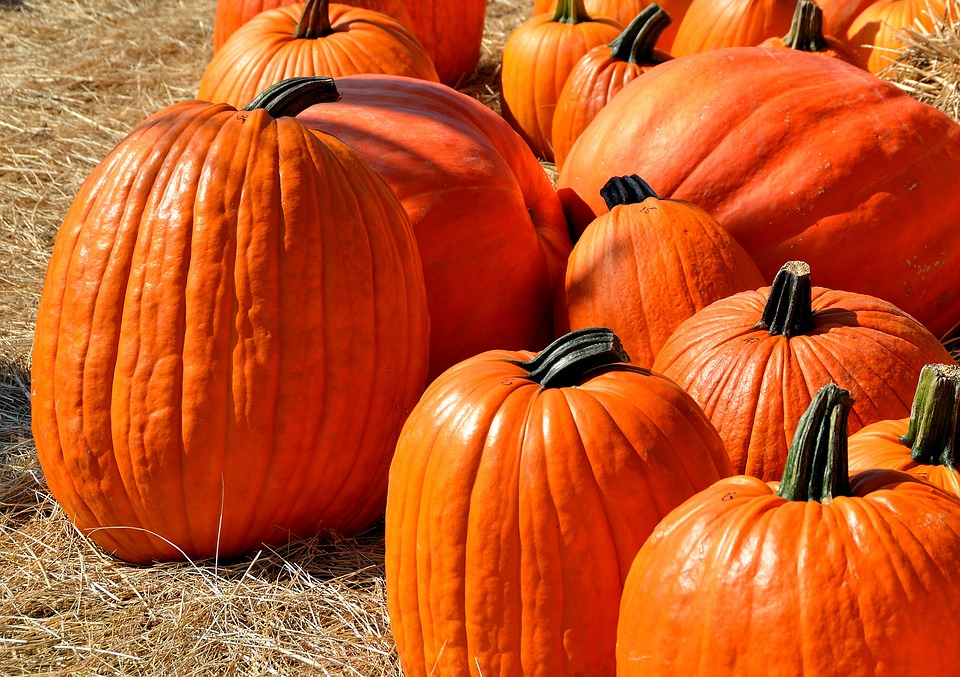 Trick or Treating Dos and Don'ts for a Safe and Spooky Halloween