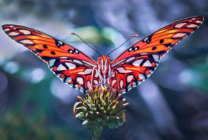 Butterfly Larry Singer Nature Photographs