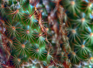 Cactus 10 Larry Singer Nature Photograph
