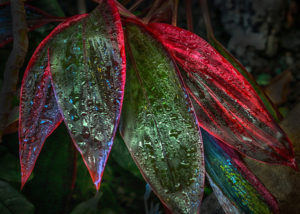Rainbow Rain Bonnet House Larry Singer Nature Photography