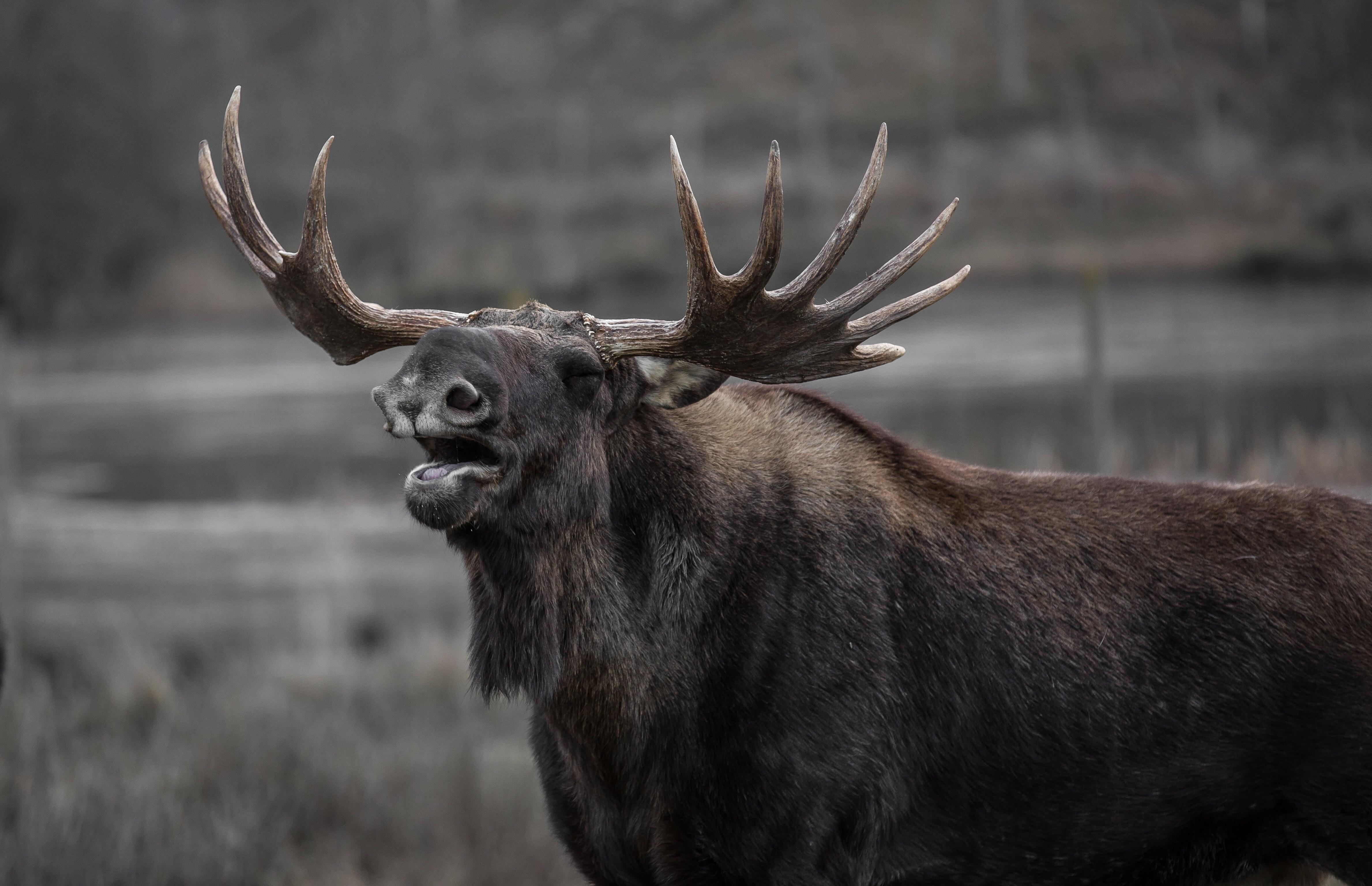 animal-animal-photography-close-up-39645