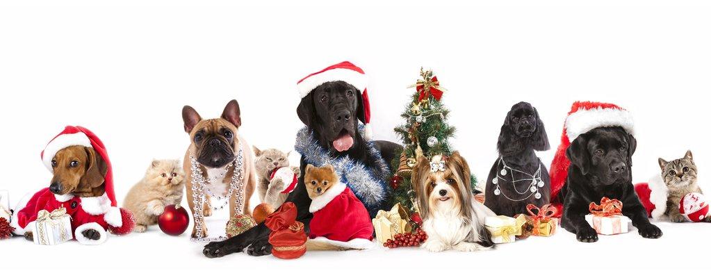 Winter Holiday Pet Hazards!
