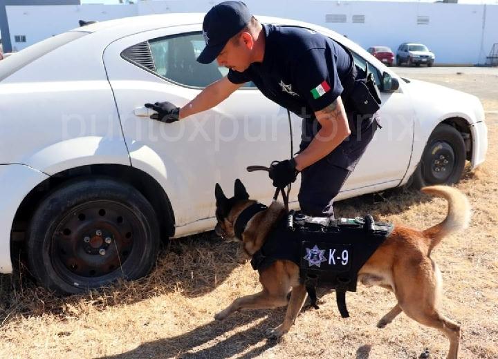 TRABAJA POLICÍA DE CADEREYTA CON POLICÍA CANINA (K9).