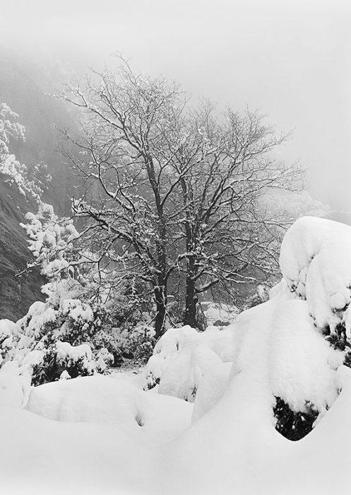 YosemiteTrail©Mark Yamamoto 1980