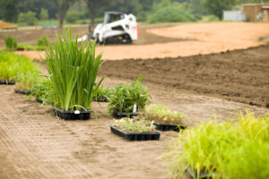 """""""New plants ready to be added to a commercial buildingaas landscape. This will be a wetland area which is being prepared by a skid loader in the background. The tan area is a coir (coconut husk) erosion blanket, which will allow the plants to establish before the blanket biodegrades."""""""