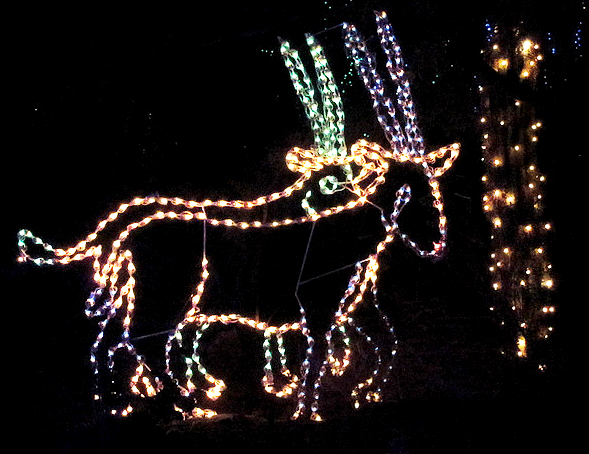Zoo Lights Gazelle_edited