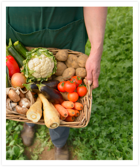 Fresh Vegetables Dietitian