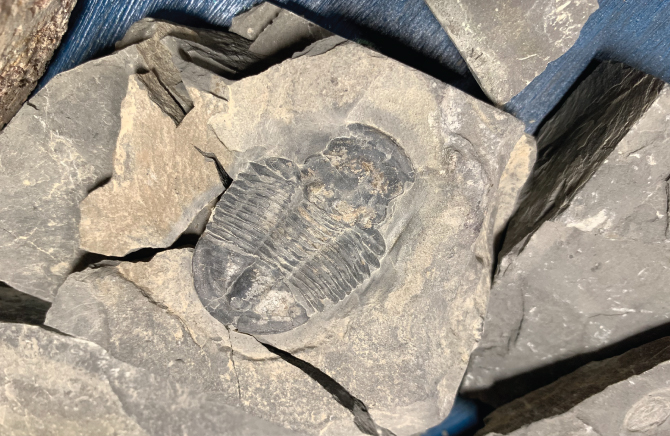Aug 7 Workshop Added to Schedule! Fun Workshops for Kids • Crystal Digging and Fossil Digging