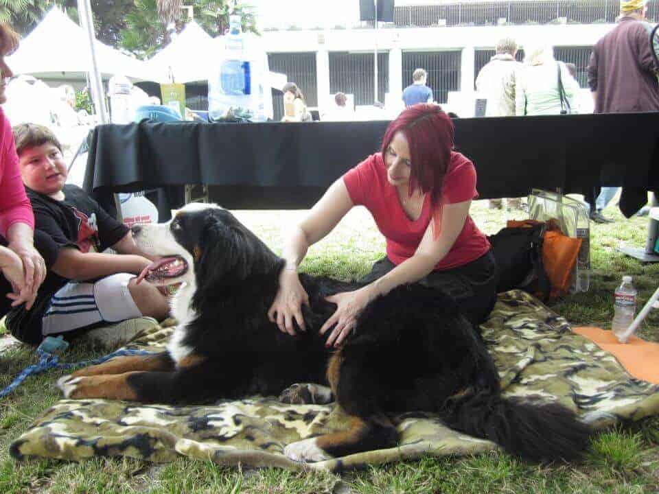 Amber doing canine massage