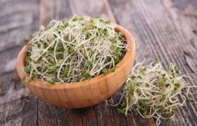 grow broccoli sprouts nutraphoria school of holistic nutrition