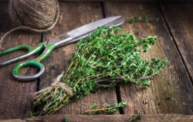benefits of thyme nutraphoria school of holistic nutrition