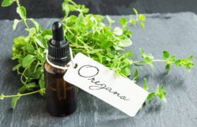 benefits of oil of oregano nutraphoria school of holistic nutrition