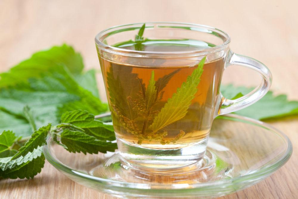 nettle leaf tea nutraphoria school of holistic nutrition