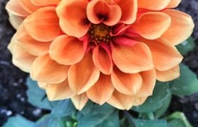 Flower Nutraphoria