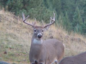buck_002