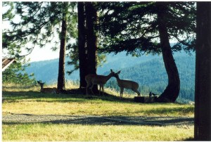 deer-lovers-1024x690