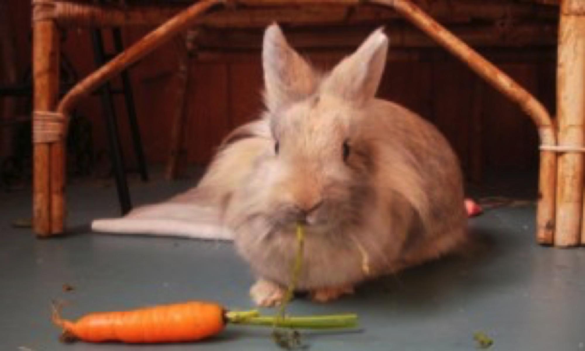 Sandra The Free Range Super Bunny