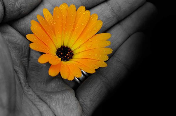 flower-in-hand