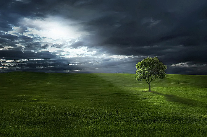 tree-light-field
