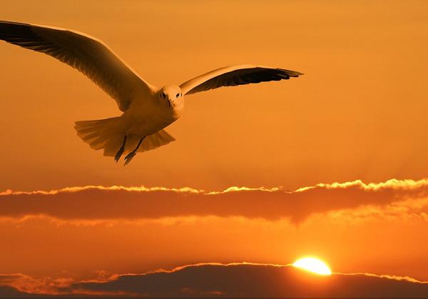 fly-sunrise