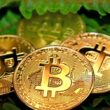 el salvador adopted bitcoin