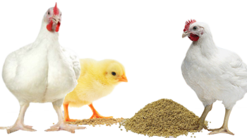 CAMToxbind is a superior Toxin binder for Poultry