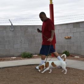Western-Arizona-Humane-Society7