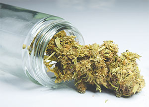 Legislators are trying to determine how regulate growing and prescribing full-strength medical marijuana in the state. (FLORIDA COURIER FILES)