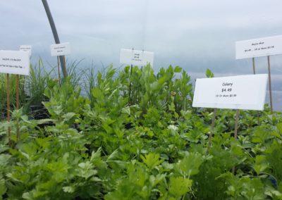 Veggies and Herbs