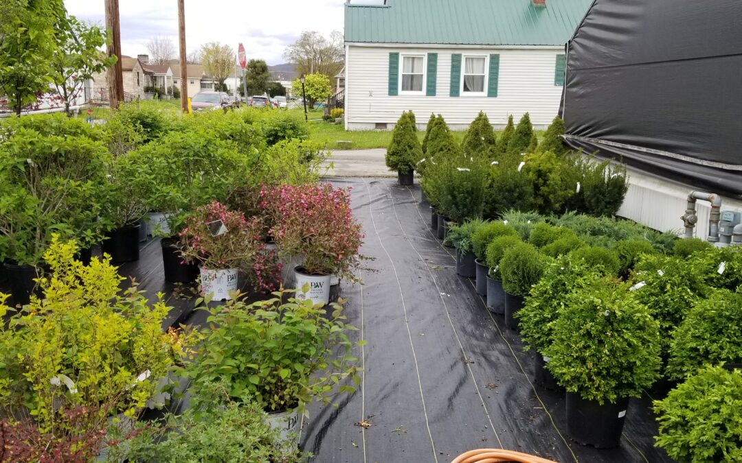 Nursery Stock Sale! 10% Off! This Weekend Only!