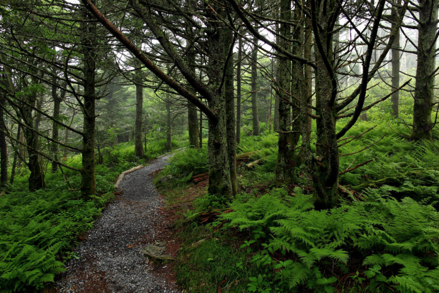 Hiking Western North Carolina