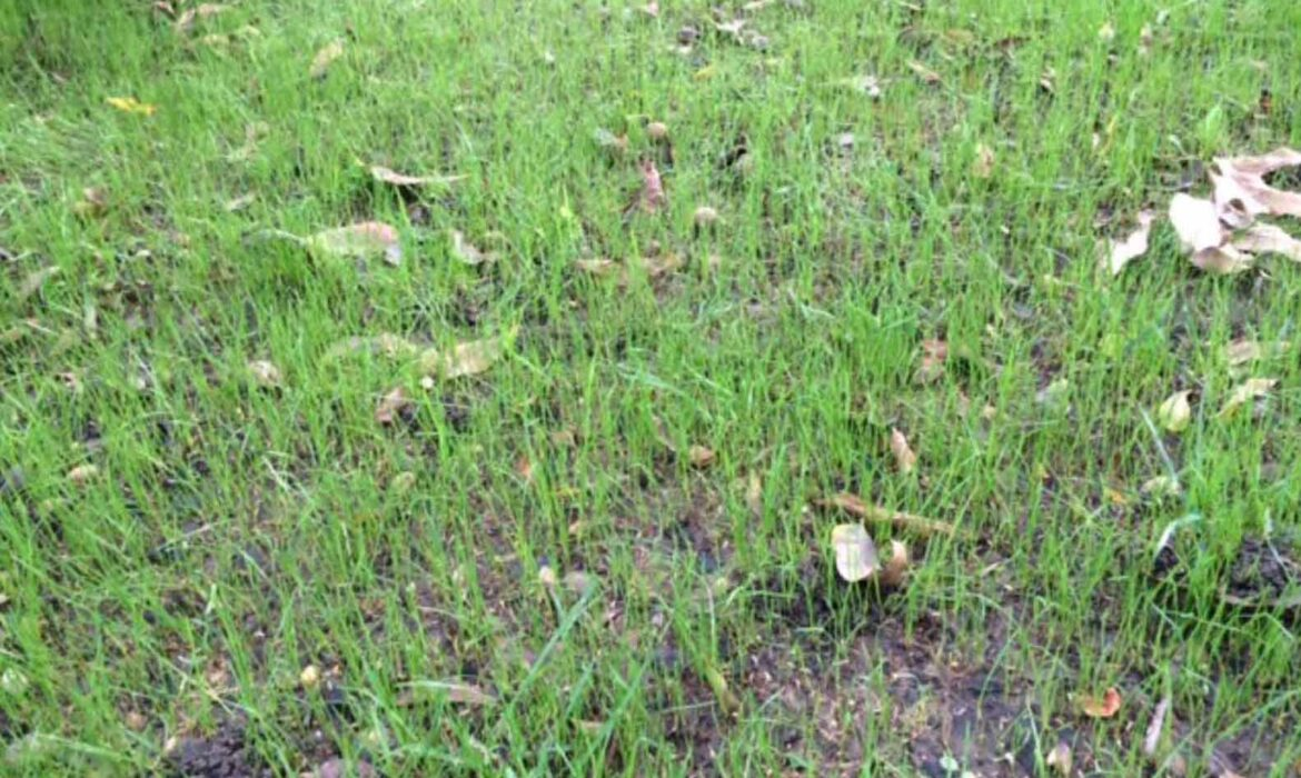 What to Expect from Texas Turfgrass Following the Recent Polar Vortex
