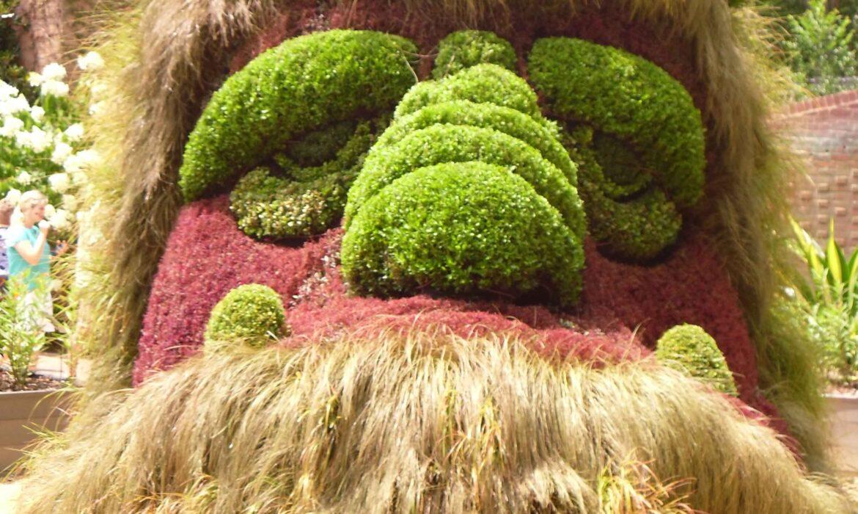 Carex<br> Edgy Sedges for the Landscape