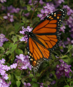 'Bugs by the Yard' and 'Unwanted Guests' cover Texas insects and pests