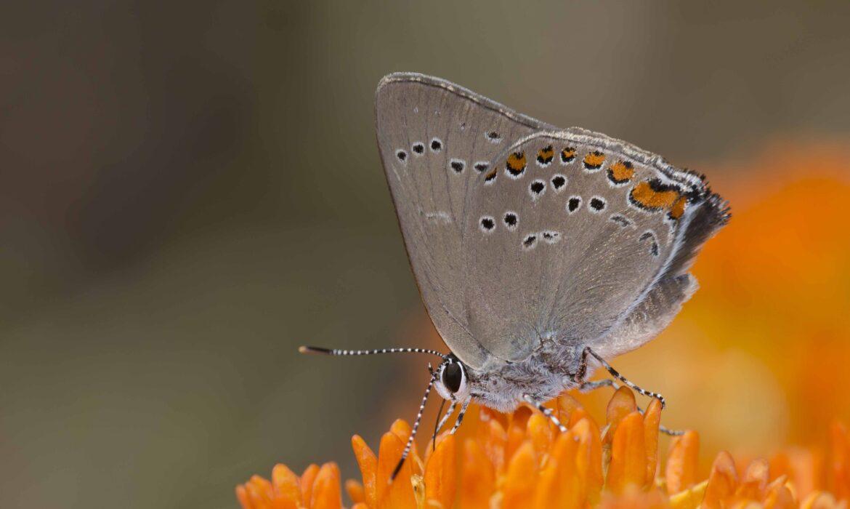Unusual Pollinators