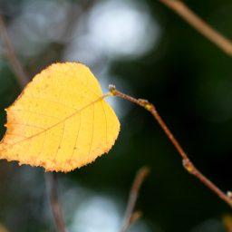 The last leaf dangling on a tree limb