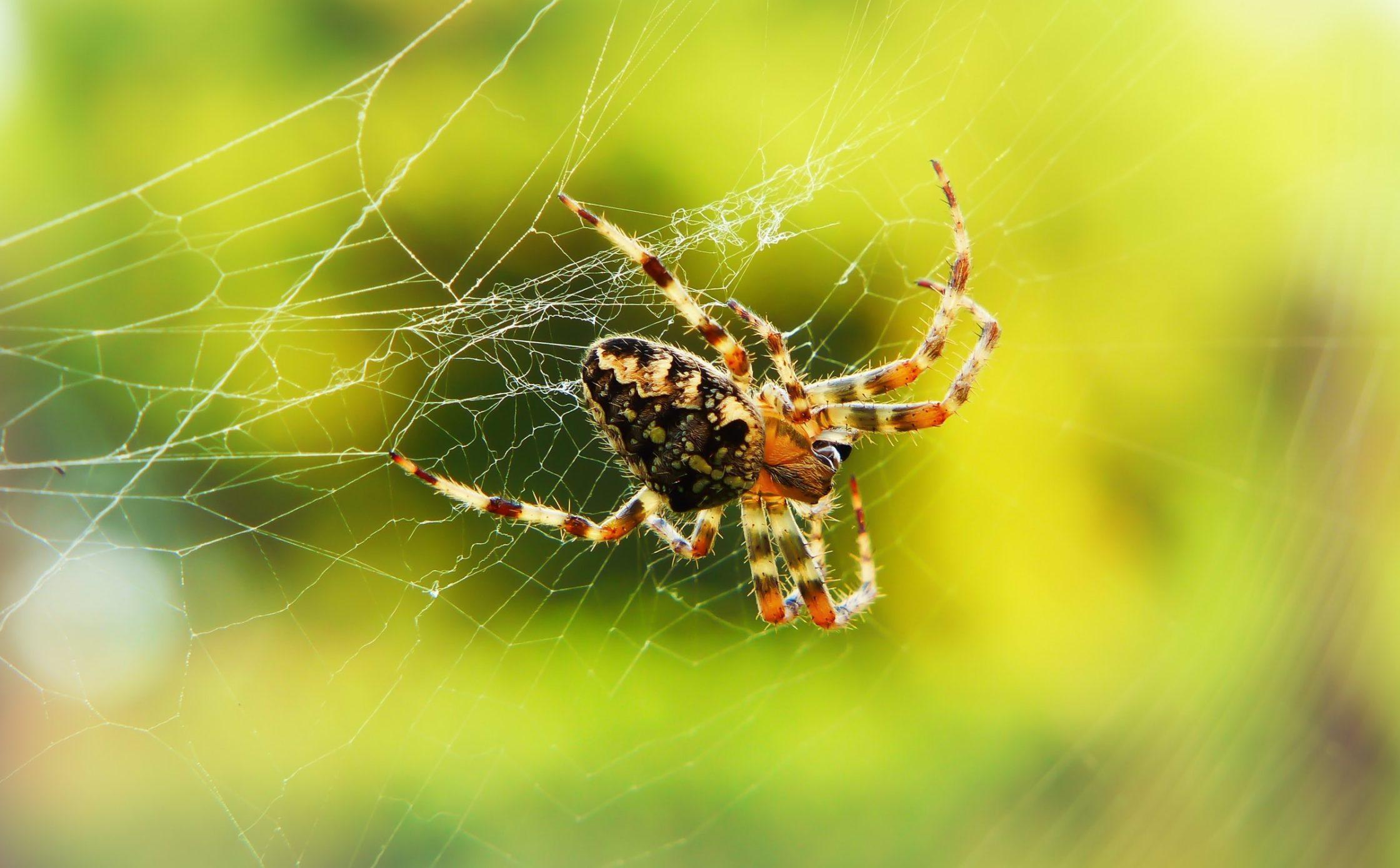 spider spiderweb up close