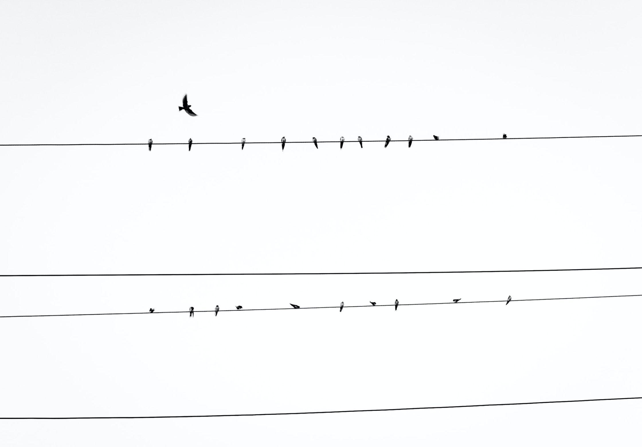 birds on telephone wire