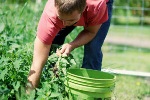 Learn How to Forage for 25 Tasty Wild Edible Plants