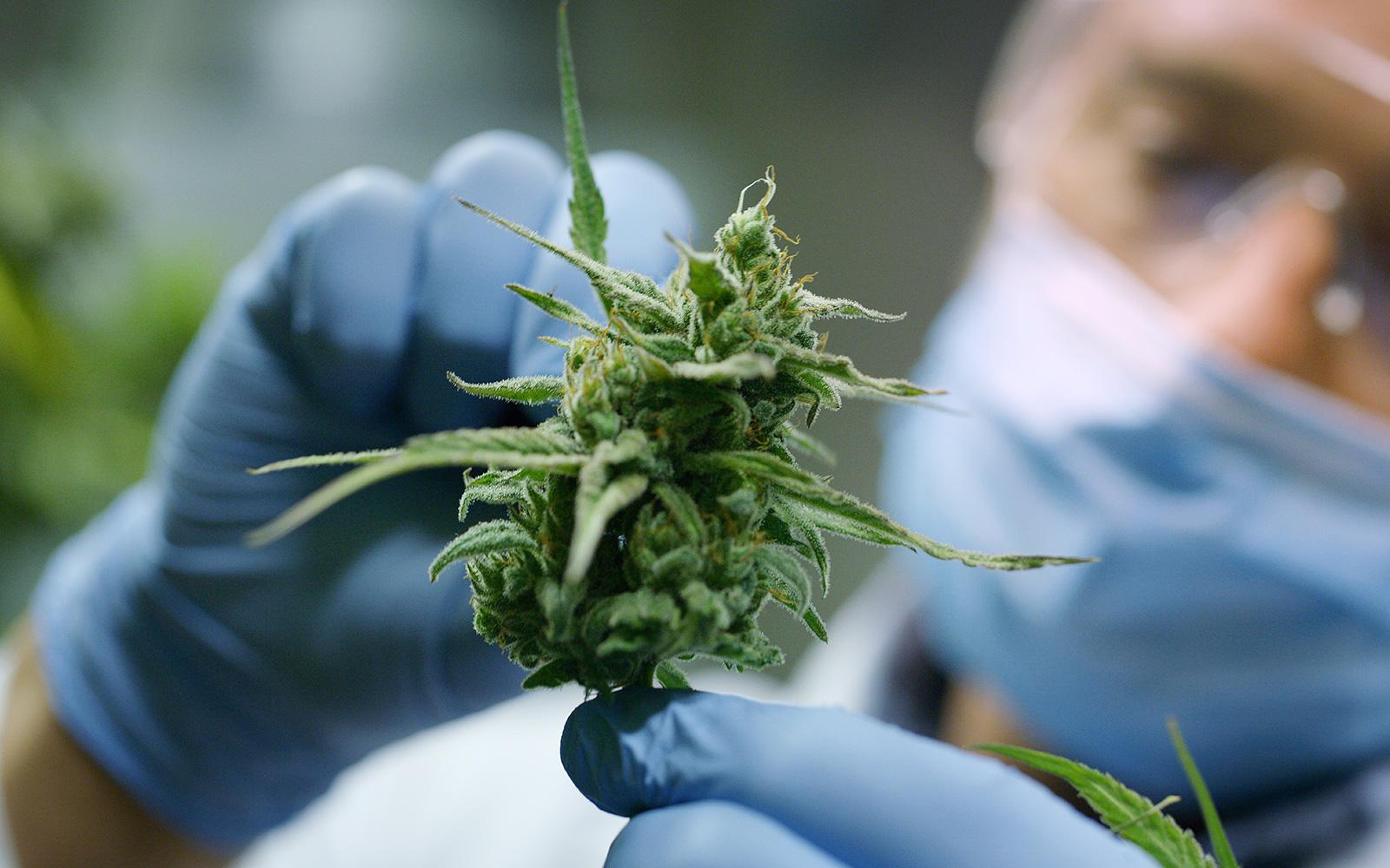 Brains Bioceutical Corp. & Cronos Australia Enter into Strategic Partnership to Supply Medicinal Cannabinoid Products