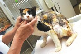 animal cruelty 2-15