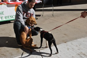 Craig Dudek of TKE plays with two dogs from the New Lease On Life Rescue animal shelter in front of Kilcawley Center. Photo by Steve Wilaj/The Jambar.