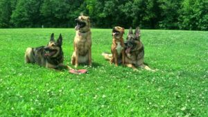Four Dogs Training in Memphis
