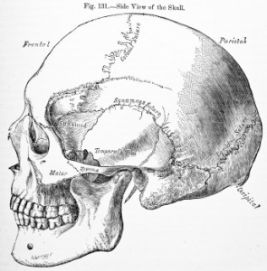 Endonasal Cranial Ajusting with Dr Adam Fields