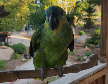 green bird on a branch | Expand with Julius and Xpnsion Network