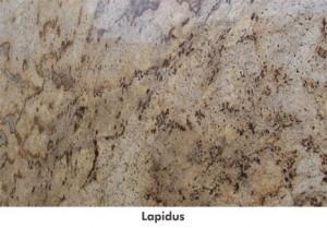 largelapidus